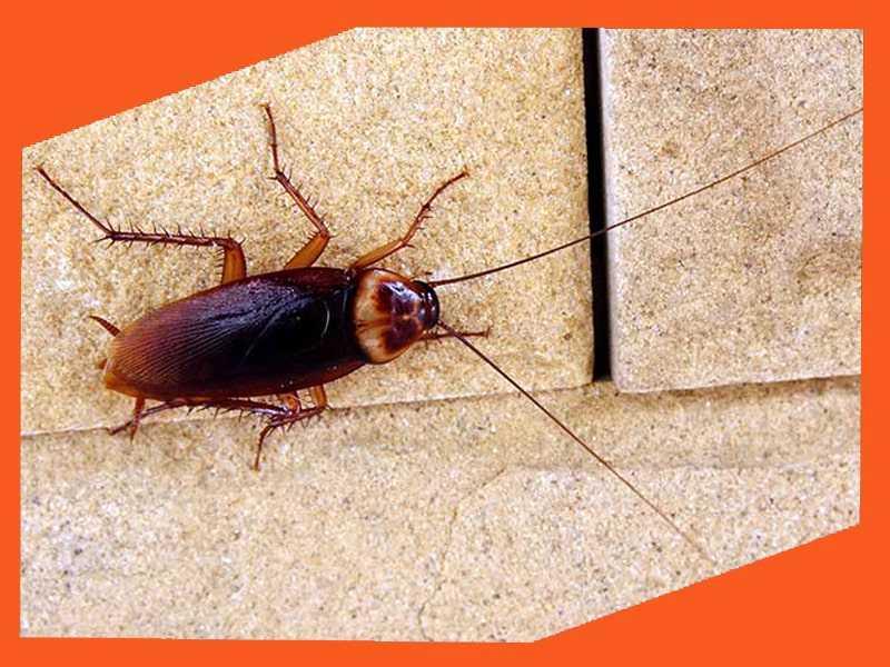 Уничтожение тараканов Сочи
